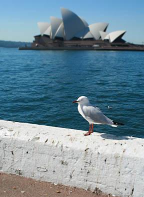 Sydney 051edited
