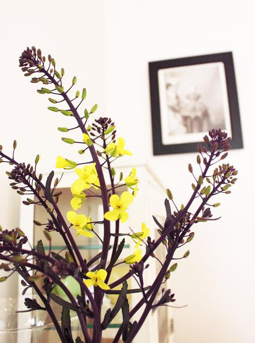 Broccolli flowers3