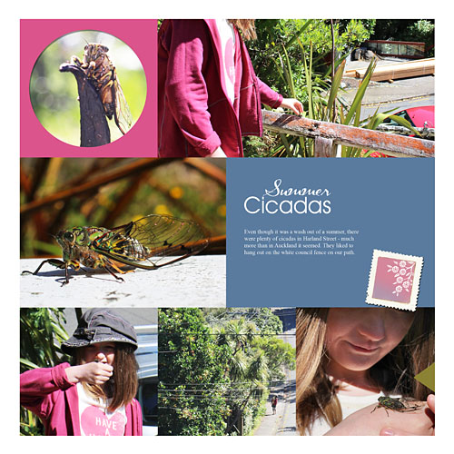 Cicadas1