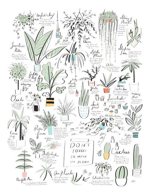 UncommonGoods_PlantPoster_14x18_white
