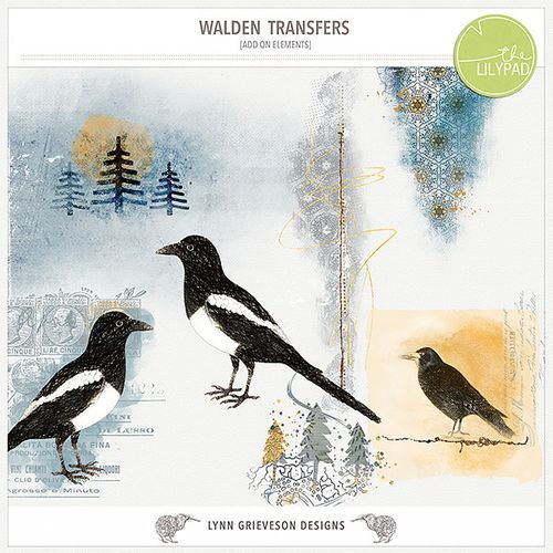Lgrieveson_walden-transfers